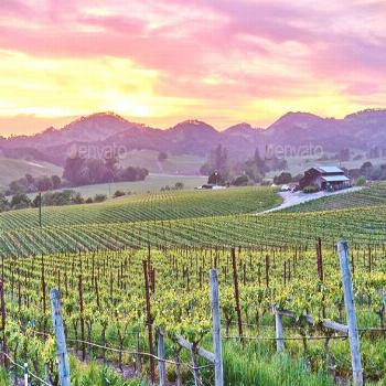 Vineyards at sunset in California, USA by haveseen. Vineyards landscape at sunset in California, US