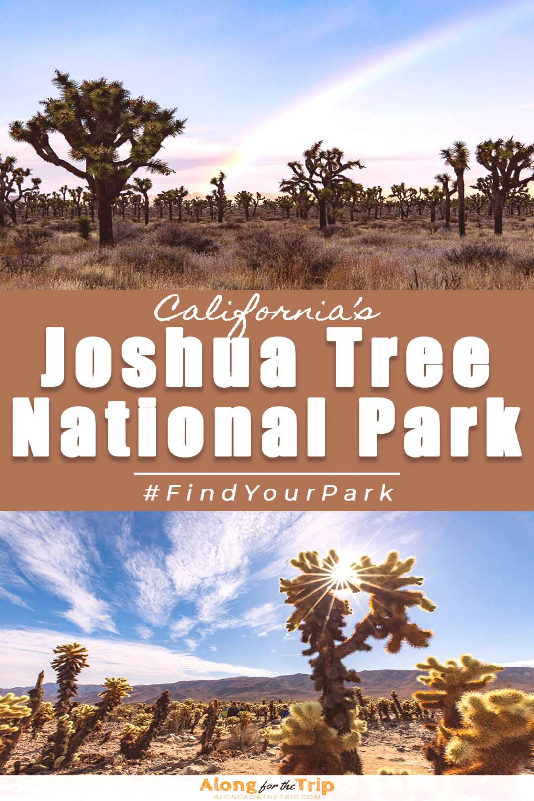 Things to do in Joshua Tree National Park The amount of things to do in Joshua Tree National Park a